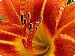sex_flowerpistol_1