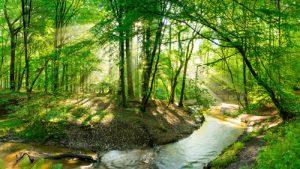 stream through trees